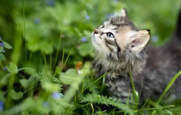 Картинка лето, трава, природа, животное, профиль, детёныш, котёнок