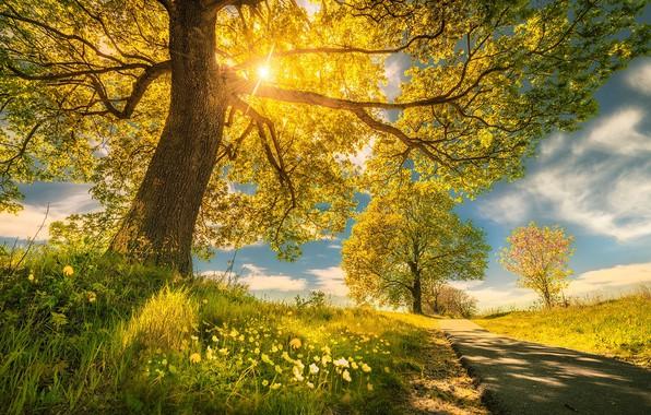 Картинка дорога, деревья, цветы, весна