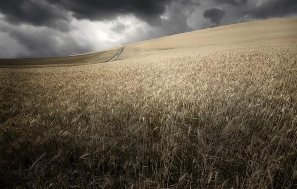 Картинка поле, лето, колосья
