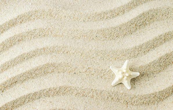 Картинка песок, фон, морская звезда, beach, texture, background, sand, marine, starfish