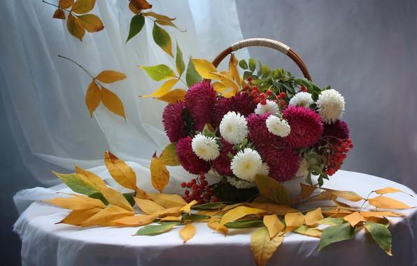 Картинка осень, листья, рябина, астры
