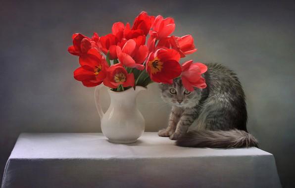 Картинка кошка, кот, цветы, поза, стол, животное, тюльпаны, кувшин, скатерть, Ковалёва Светлана, Светлана Ковалёва
