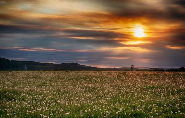 Картинка поле, небо, трава, солнце, облака, закат, цветы, одуванчики