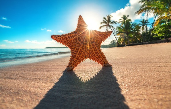 Картинка солнце, лучи, тропики, пальмы, океан, берег, звезда, тень, Valentin Valkov