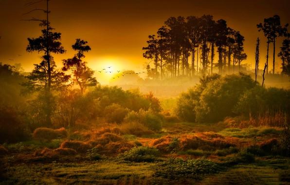 Картинка Закат, Солнце, Природа, Восход, Туман, Деревья, Лес, Рассвет, Пейзаж, Nature, Grass, Landscape, Sun, Sunset, Sunrise, …