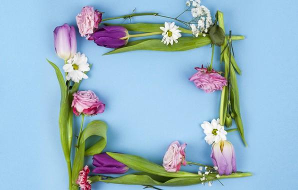 Картинка цветы, розы, фиолетовые, тюльпаны, розовые, pink, flowers, beautiful, голубой фон, tulips, spring, purple, roses