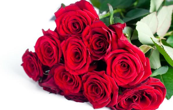 Картинка цветы, розы, букет, красные, red, flowers, beautiful, romantic, roses