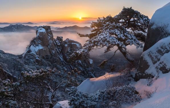 Картинка зима, облака, снег, деревья, пейзаж, горы, природа, туман, восход, скалы, рассвет, утро, сосны, Корея, заповедник, …