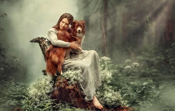 Картинка лес, деревья, модель, пень, Девушка, собака, сидит