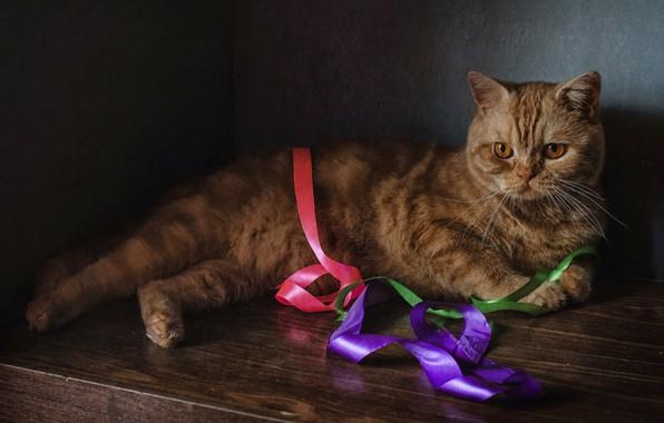 Картинка кот, рыжий, лента