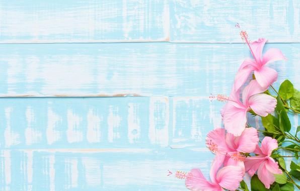 Картинка цветы, фон, wood, pink, flowers