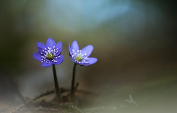 Картинка парочка, цветки, боке