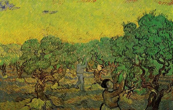 Картинка Винсент ван Гог, Olive Grove with, сборщики ягод, Picking Figures
