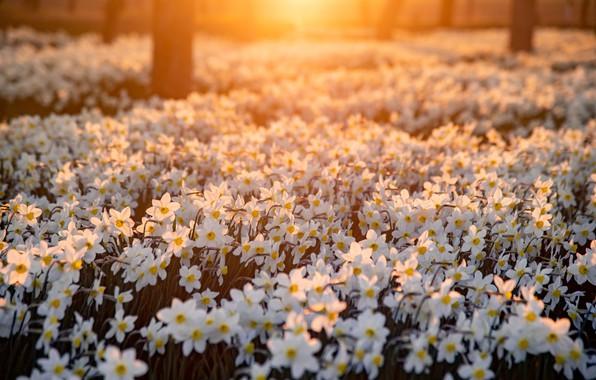 Картинка свет, цветы, гвоздики