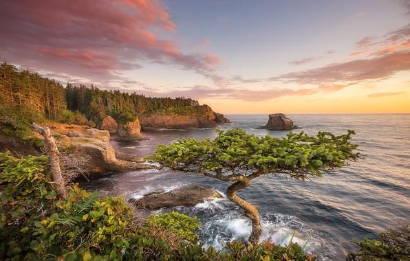 Картинка закат, дерево, побережье