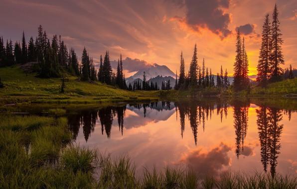 Картинка пейзаж, закат, природа, озеро, красота, ели, ёлки