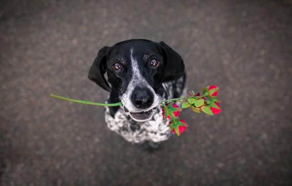 Картинка цветок, друг, собака