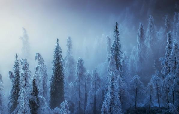 Картинка зима, лес, туман