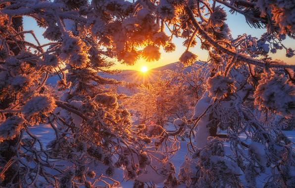 Картинка зима, снег, деревья, закат, ветки, Финляндия, Андрей Базанов