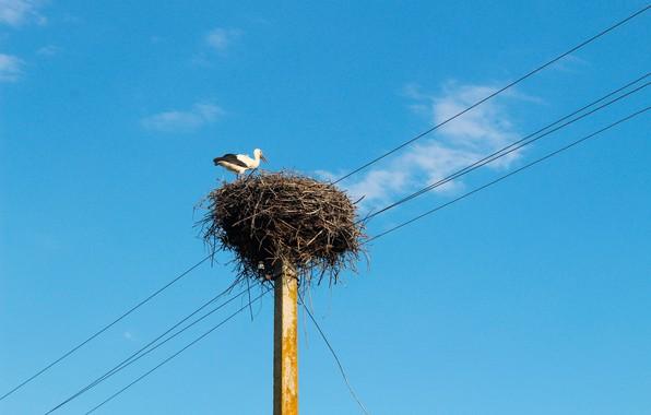 Картинка птица, гнездо, аист