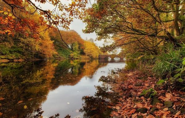 Картинка осень, пейзаж, природа, река, красота, дуб