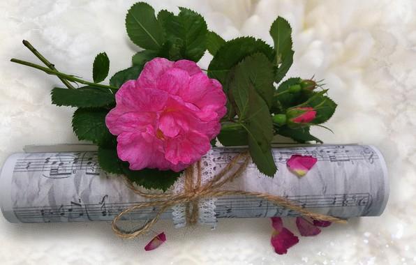 Картинка цветок, лето, природа, ноты, музыка, настроение, роза, красота, rose, flower, красивые, flowers, beautiful, beauty, harmony, …