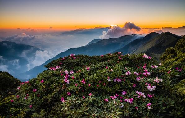 Картинка зелень, небо, листья, солнце, облака, лучи, пейзаж, цветы, горы, природа, туман, рассвет, холмы, склоны, вершины, …