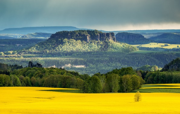Картинка fields, Natur, Raps, Elbe Sandstone mountains, saxonian switzerland