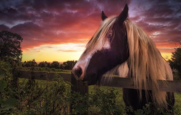 Картинка закат, конь, забор