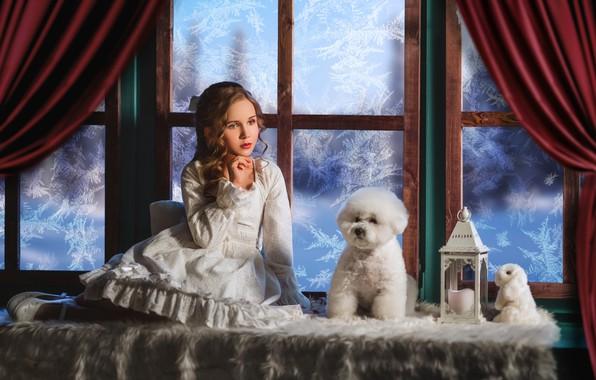 Картинка игрушка, собака, кролик, платье, окно, мороз, девочка, фонарь, зайка, пудель, локоны, пёсик, на подоконнике, Диана …