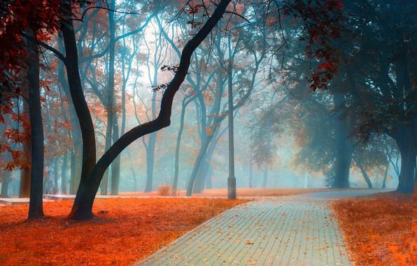 Картинка дорога, осень, листья, деревья, пейзаж, ветки, природа, туман, парк, стволы, листва, плитка, столб, утро, дорожка, …
