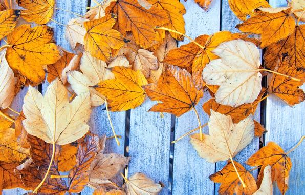 Картинка осень, листья, фон, дерево, colorful, клен, wood, background, autumn, leaves, осенние, maple