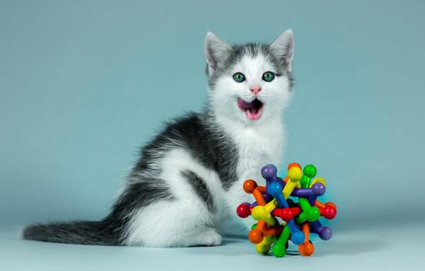 Картинка язык, кошка, взгляд, котенок, фон, голубой, черно-белый, игрушка, портрет, малыш, котёнок, сидит, облизывается, разноцветная, зеленоглазый, …