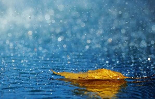 Картинка осень, брызги, лист, дождь