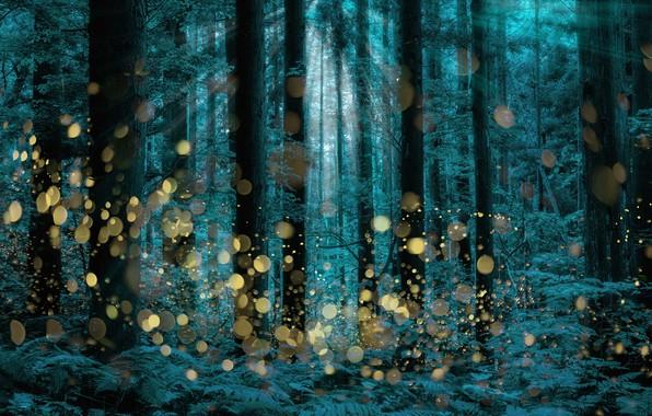 Картинка trees, firefly, longexposure, Shining forest