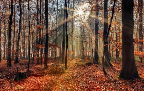 Картинка осень, лес, солнечный свет