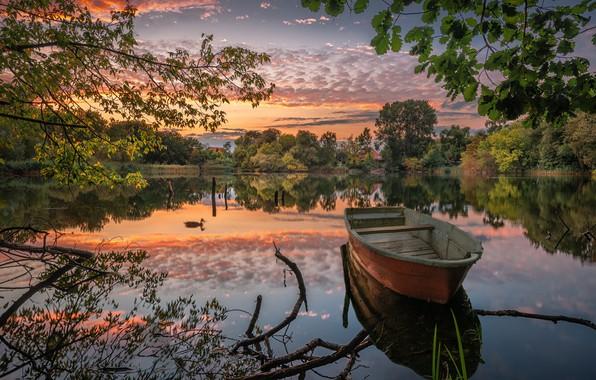Картинка деревья, ветки, озеро, пруд, отражение, лодка, утка