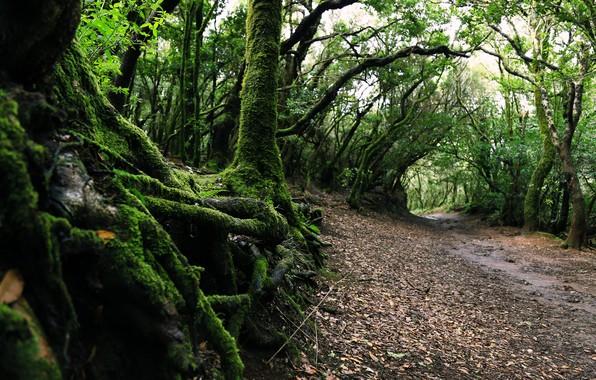 Фото обои Природа, Дорога, Деревья, Лес, Мох