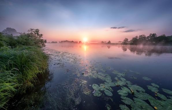 Картинка лето, трава, деревья, пейзаж, природа, река, рассвет, утро, берега, кувшинки, Дубна, Андрей Чиж