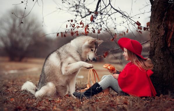 Картинка осень, природа, дерево, животное, корзина, собака, девочка, шляпка, ребёнок, накидка, пёс, булка, Анна Ипатьева