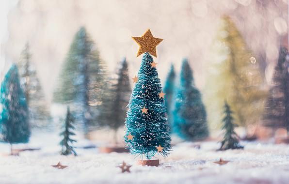 Картинка праздник, звезда, ёлка