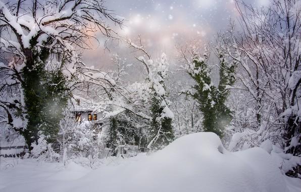 Картинка зима, снег, деревья, пейзаж, природа, дом, сугробы, снегопад, Болгария, Albena Markova