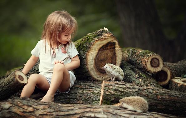 Картинка животные, природа, девочка, ребёнок, брёвна, ёжики, ежи, Марианна Смолина