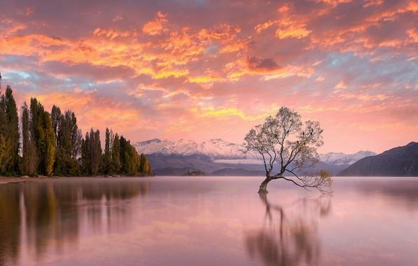 Картинка небо, деревья, закат, озеро, Новая Зеландия, New Zealand, Lake Wanaka