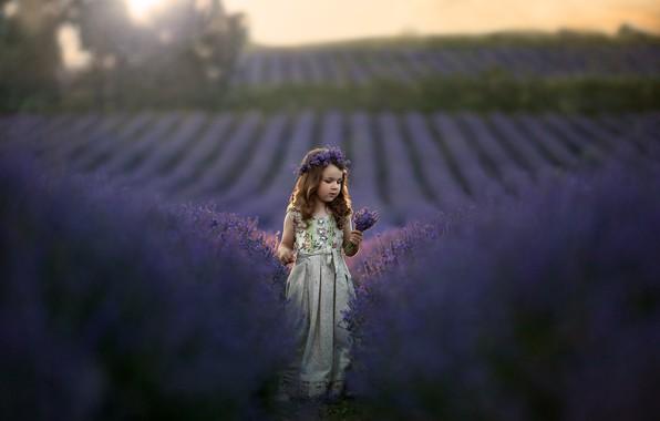 Картинка поле, природа, платье, девочка, венок, ребёнок, букетик, лаванда, Кудрова Татьяна