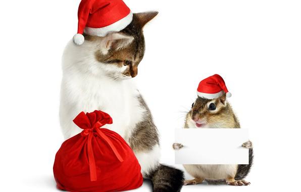 Картинка кошка, белка, Новый год, мешок, колпак