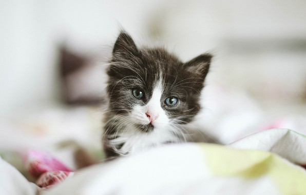 Картинка глаза, котенок, маленький