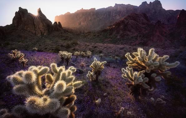 Картинка горы, утро, кактусы