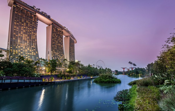 Фото обои деревья, огни, пруд, парк, вечер, фонари, Сингапур, небоскрёбы, кусты, сады, Gardens by the Bay