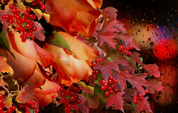Картинка осень, дождь, букет, Розы, калина